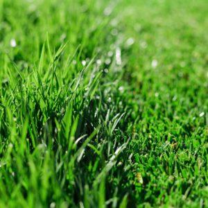 herriman-utah-lawn-and-yard-maintenance